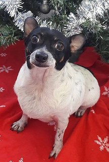 Ratbone Rescues - Available Dogs