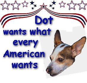 Featured Rat Terrier