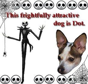 Featured Rat Terrier
